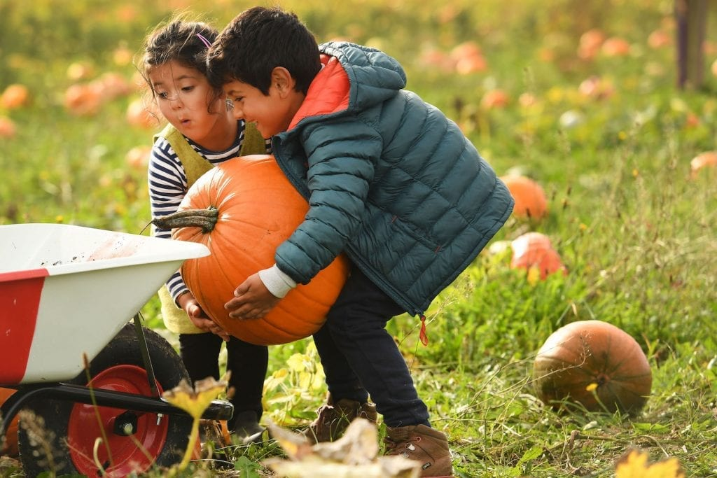 Kids loading a large pumpkin into a wheelbarrow