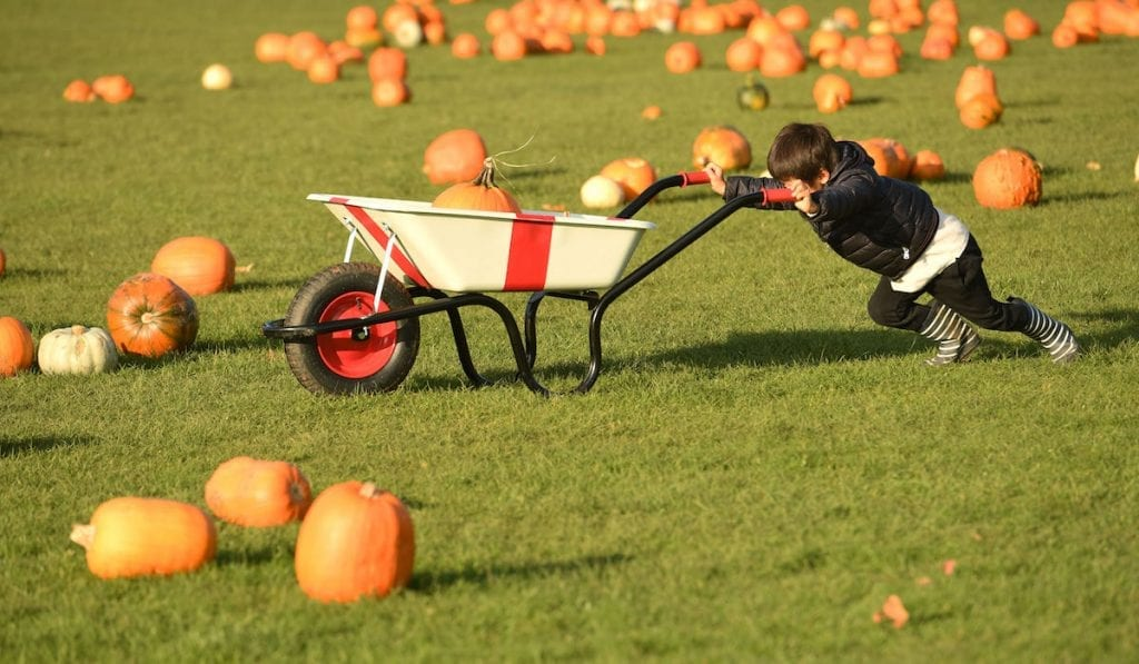 Child with a pumpkin in a wheelbarrow